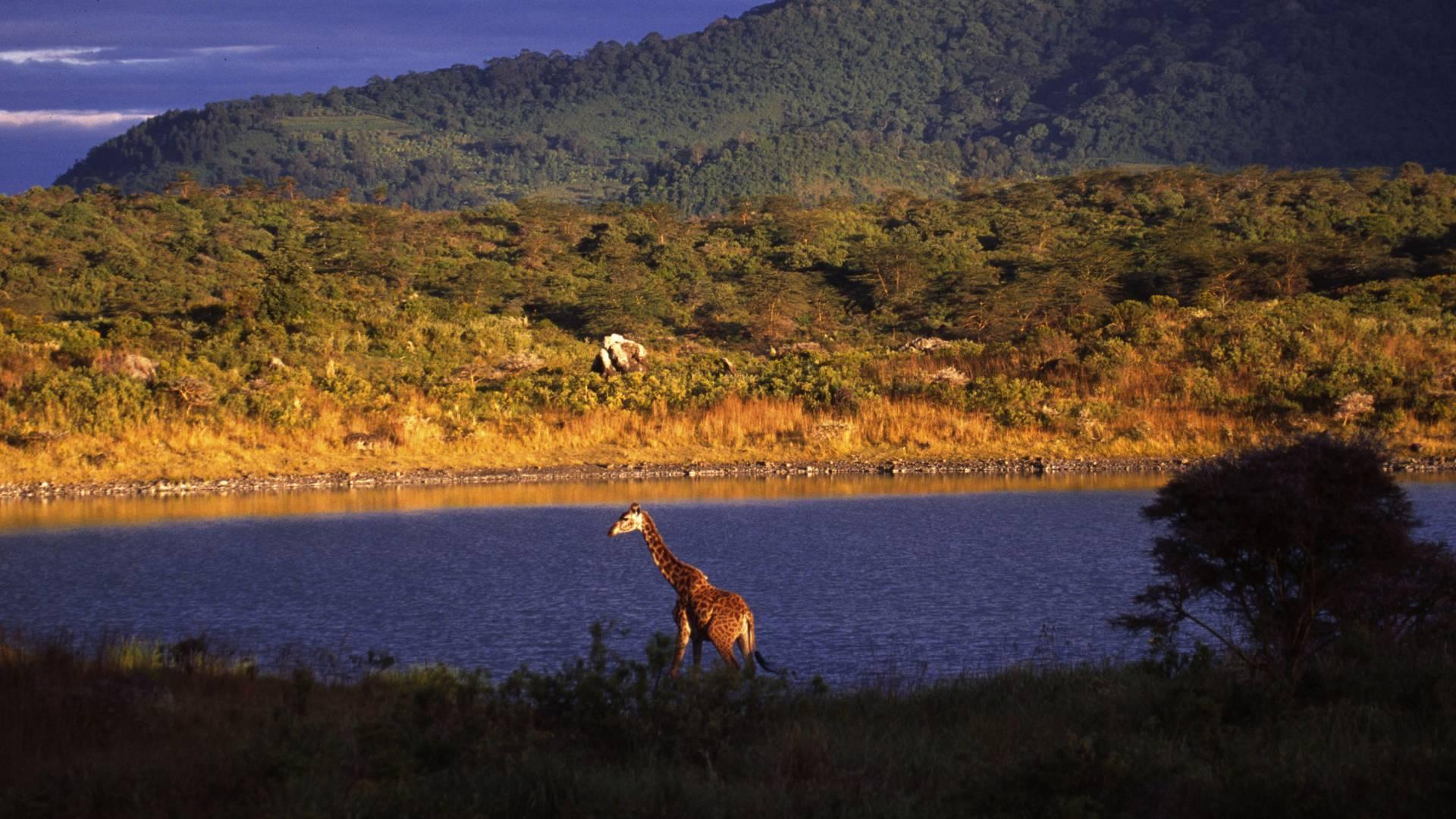 Arusha safari