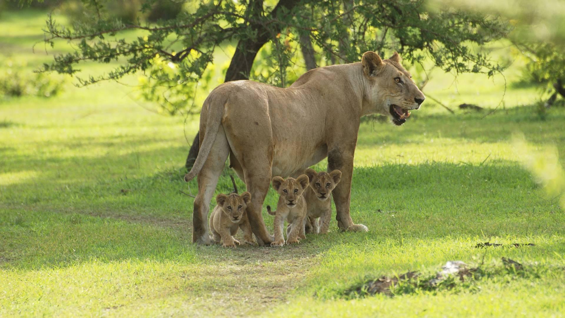 Aufregende Wildtiersichtungen