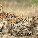 Abenteuerliche Wildtiersichtungen
