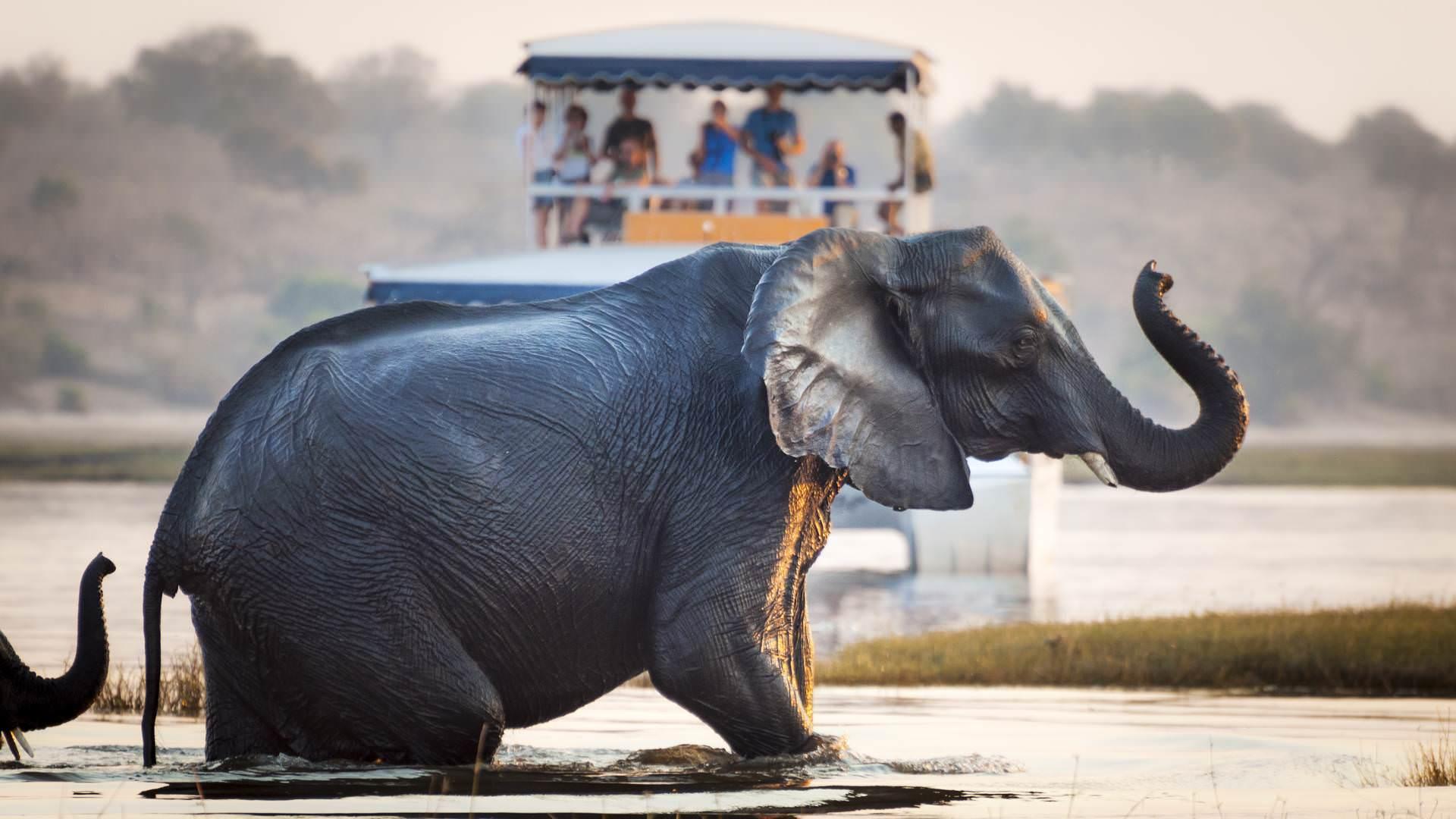 Elephant Chobe National Park in Botswana, Africa pintoafrica.com