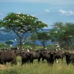 Großartige Wildtiersichtungen