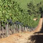 Unendliche Weingüter