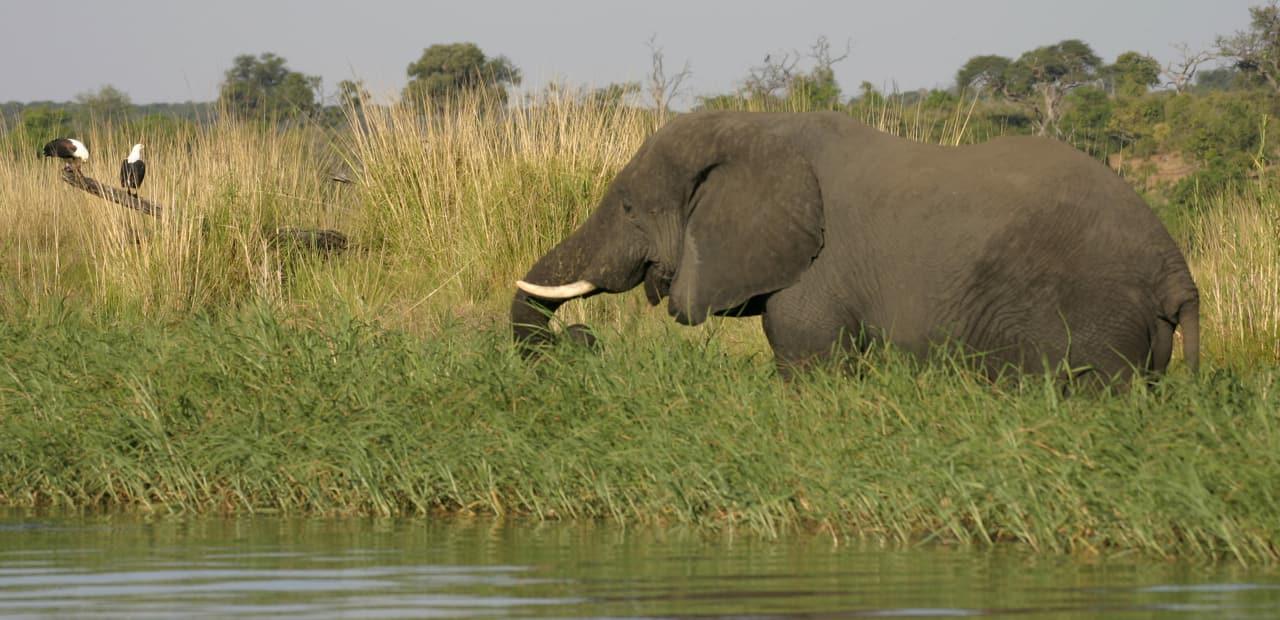 Erleben Sie das Reich der Elefanten