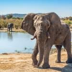 elephant beim wasserloch
