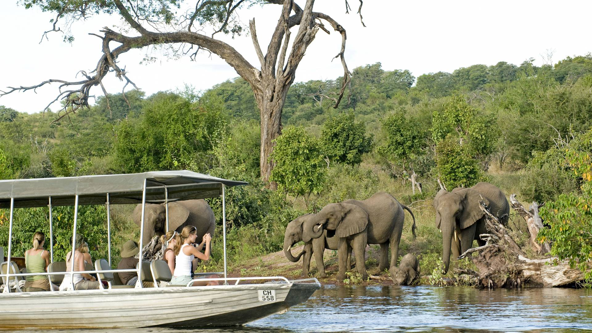 Chobe river boat cruise Sanctuary retreats botswana