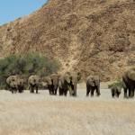 Großartige Elefantensichtungen