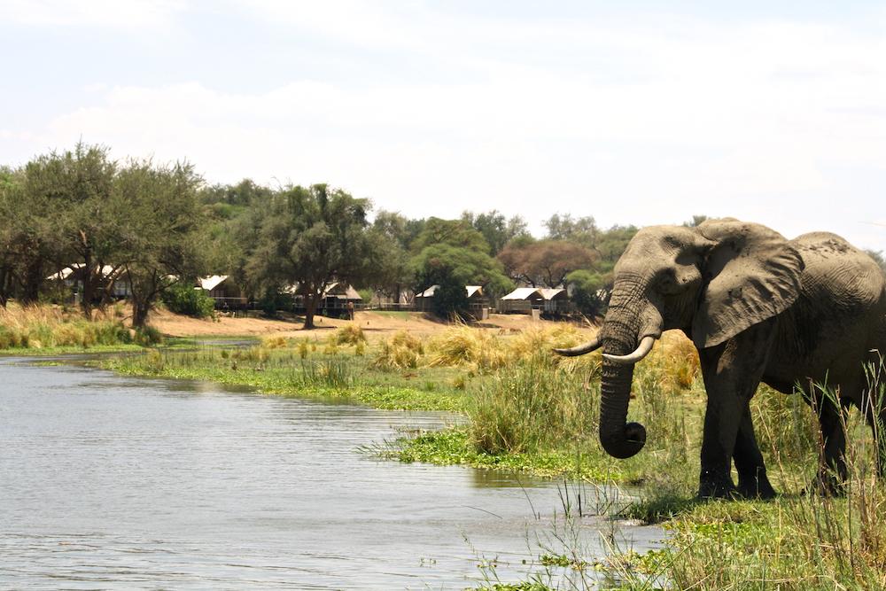 Anabezi camp lower zambezi Elephant