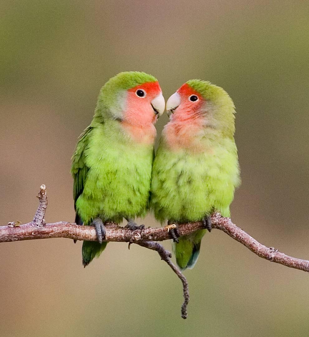 Einzigartige Vogelsichtungen