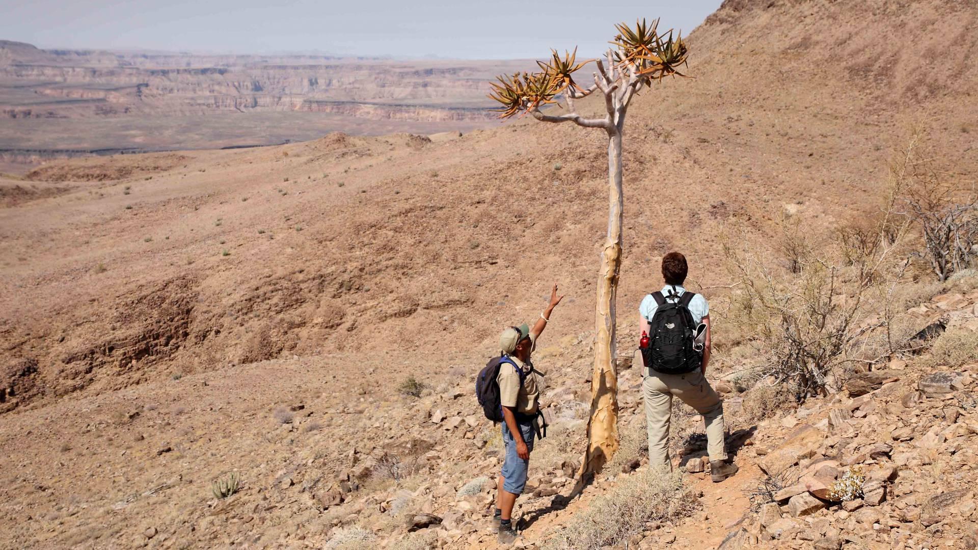 Hervorragende Walking-Safaris