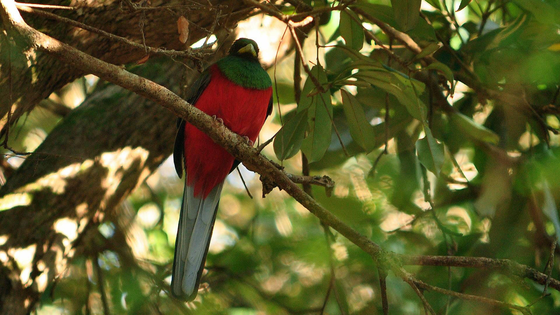 Faszinierende Vogelsichtungen