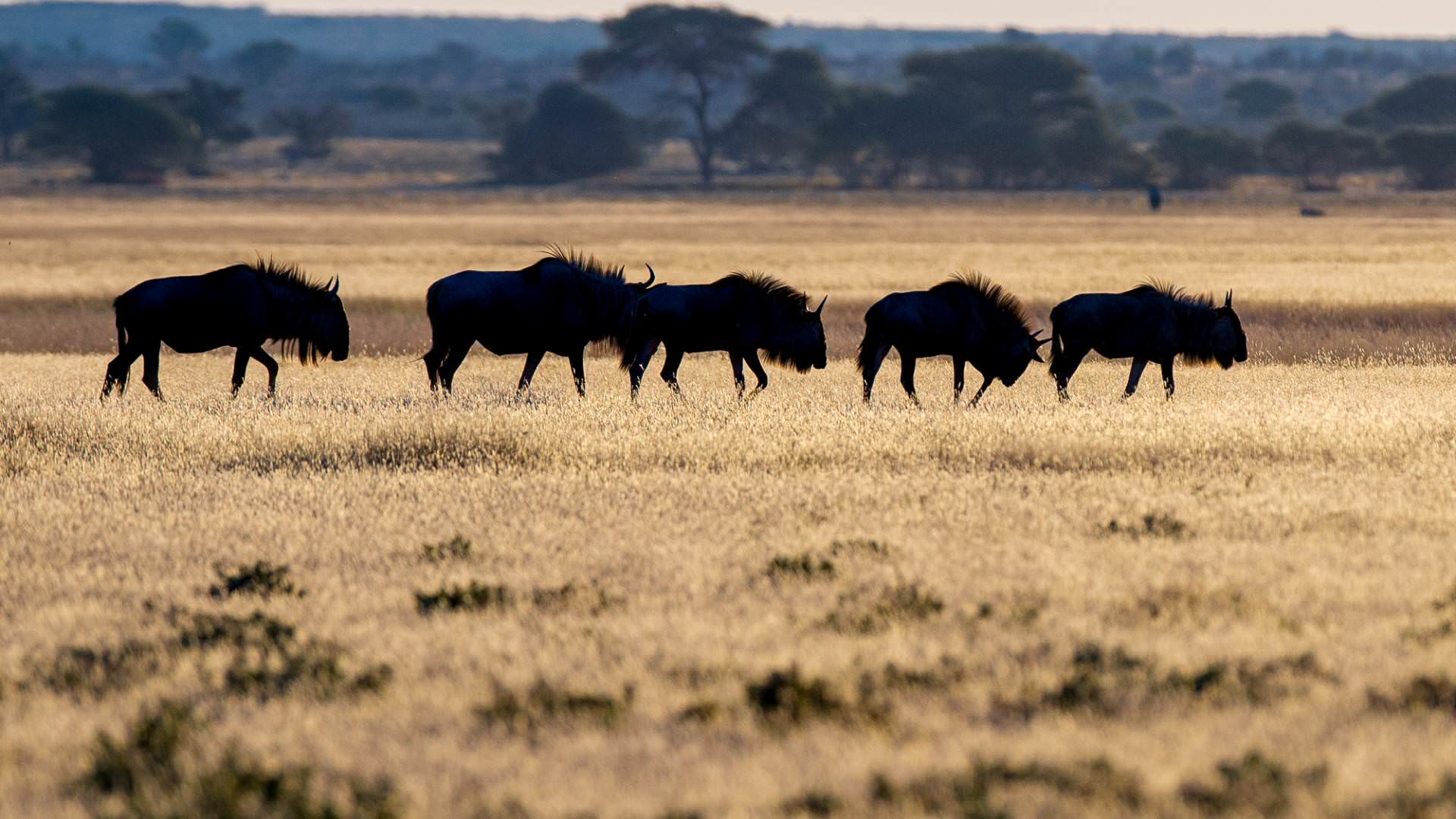 kwando-tau-pan-camp-central-kalahari-botswana