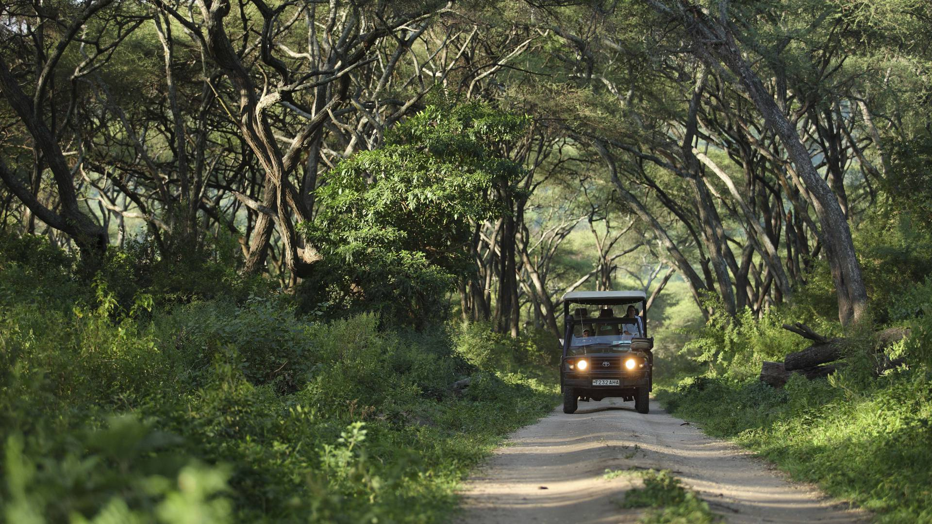 game drive lake manyara with &beyond
