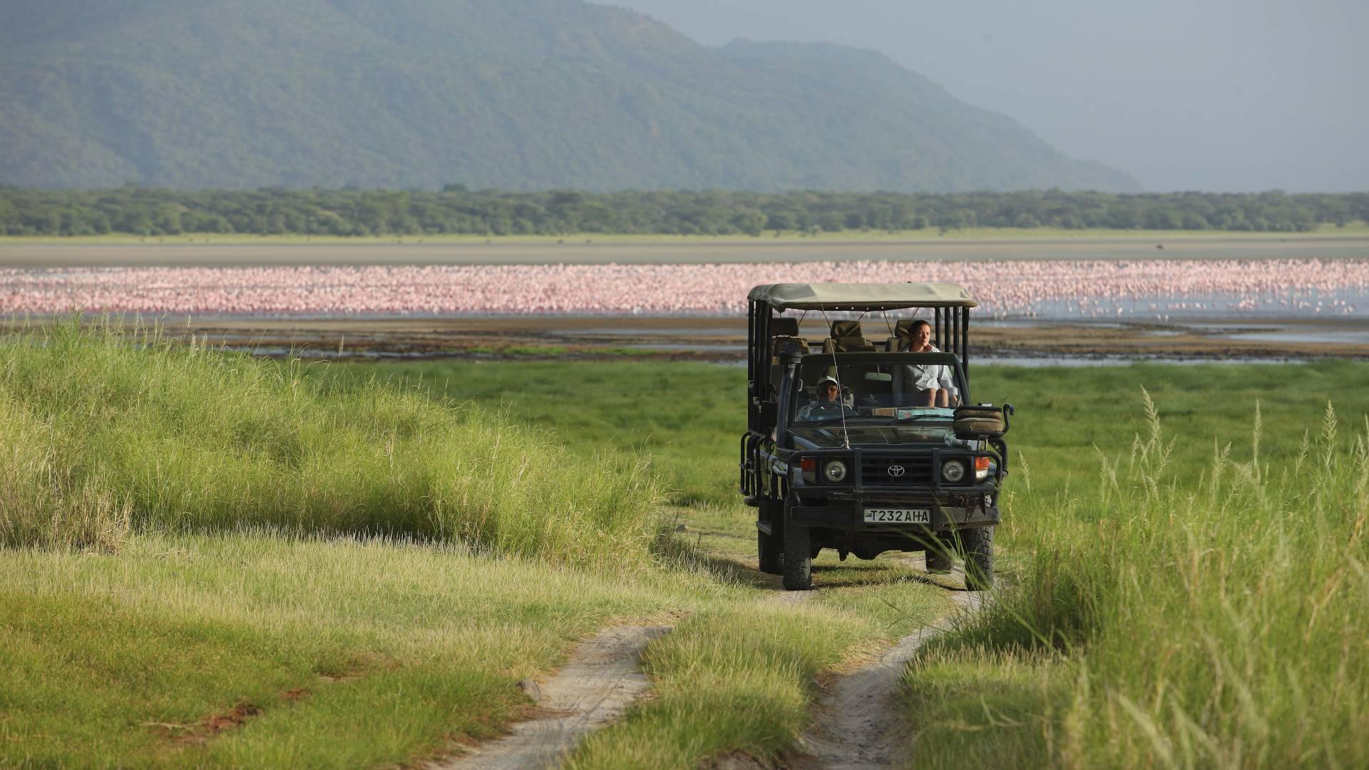 Lake manyara flamingoes