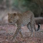 Spannende Wildtiersichtungen