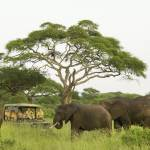 game drive mit elephanten chemchem little