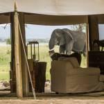 elephanten auf besuch little chem chem