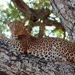 Lower Zambezi National Park Sambia
