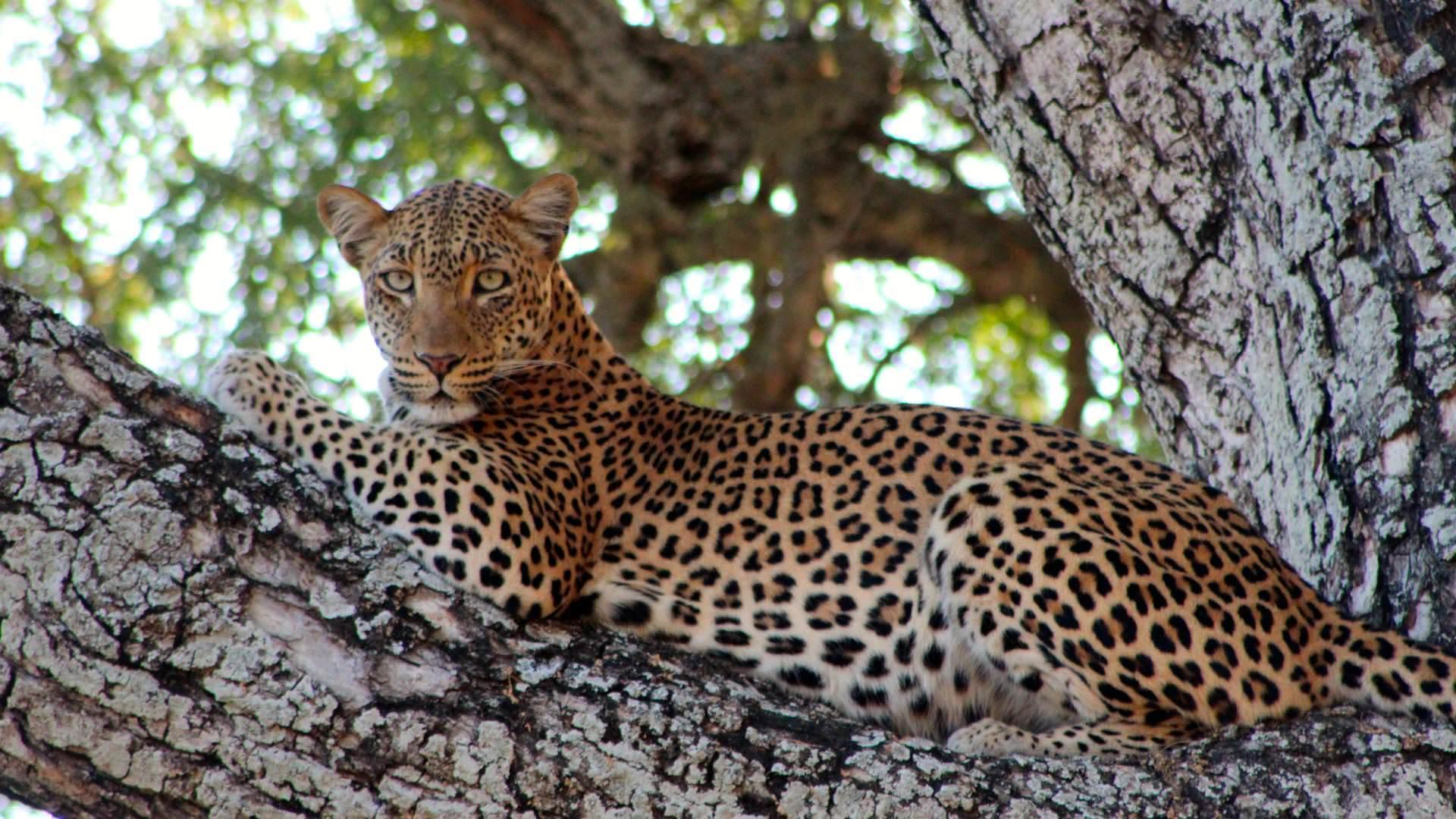 Lower Zambezi National Park Sambia