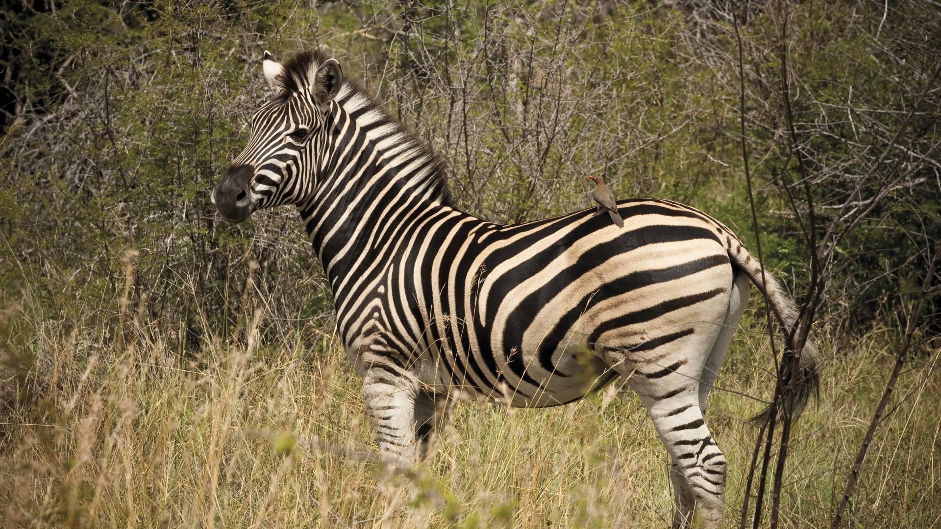 Hervorragende Wildtiersichtungen