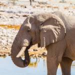 Elephant water hole etosha