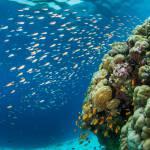 Spektakuläre Unterwasserwelt