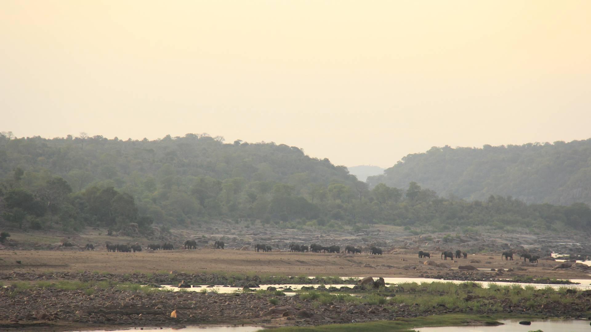 Buffalo im gonarezhou mit gonarezhou bushcamps