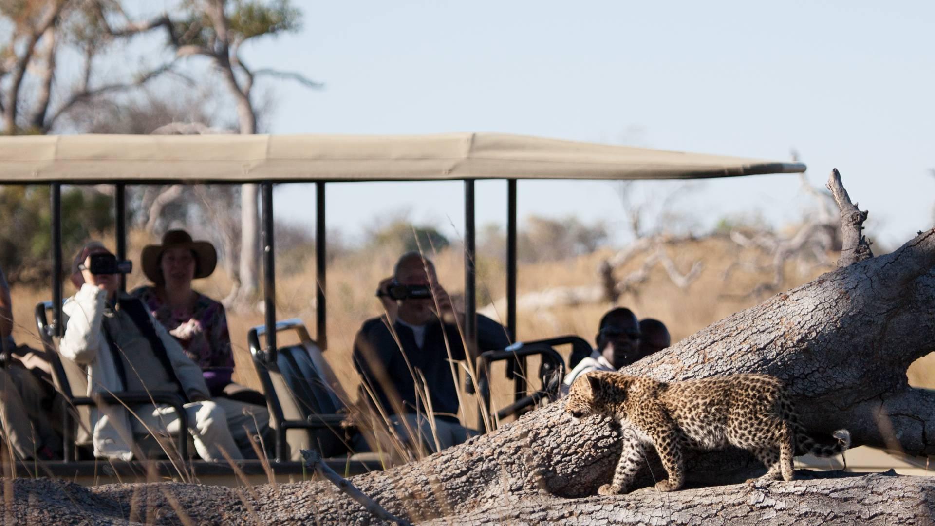 Leopard beim game drive pom pom camp