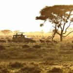Sunset Im Serengeti
