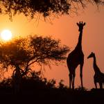 Faszinierende Wildtiersichtungen