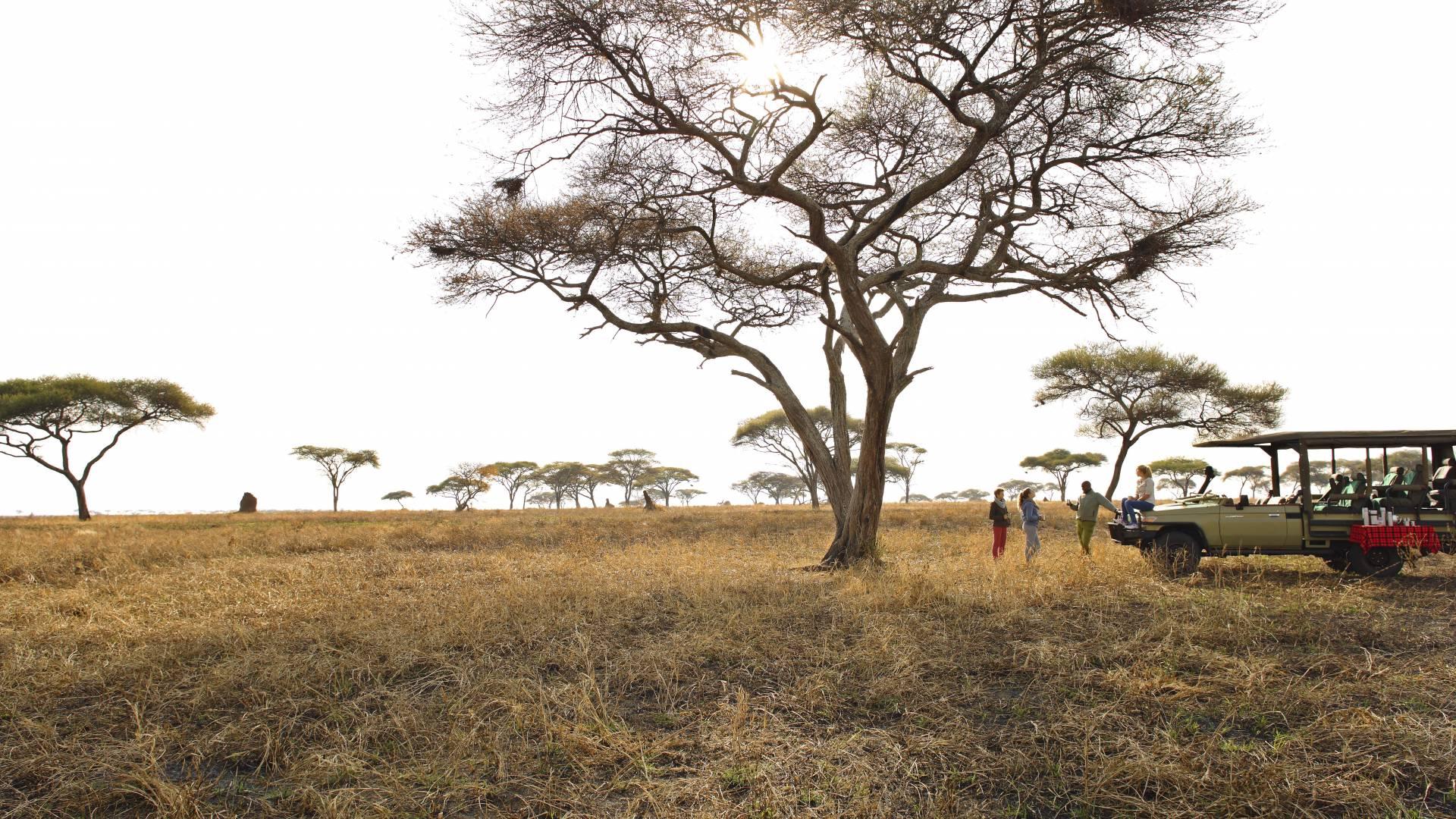 Pirschfahrt im Tarangire mit olivers camp