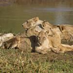 Imposante Wildtiersichtungen