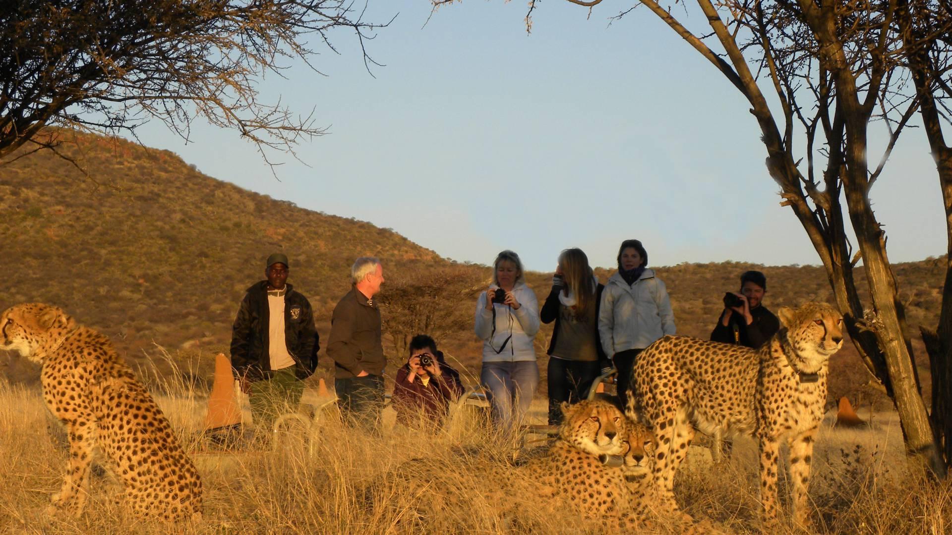 Okonjima Cheetah