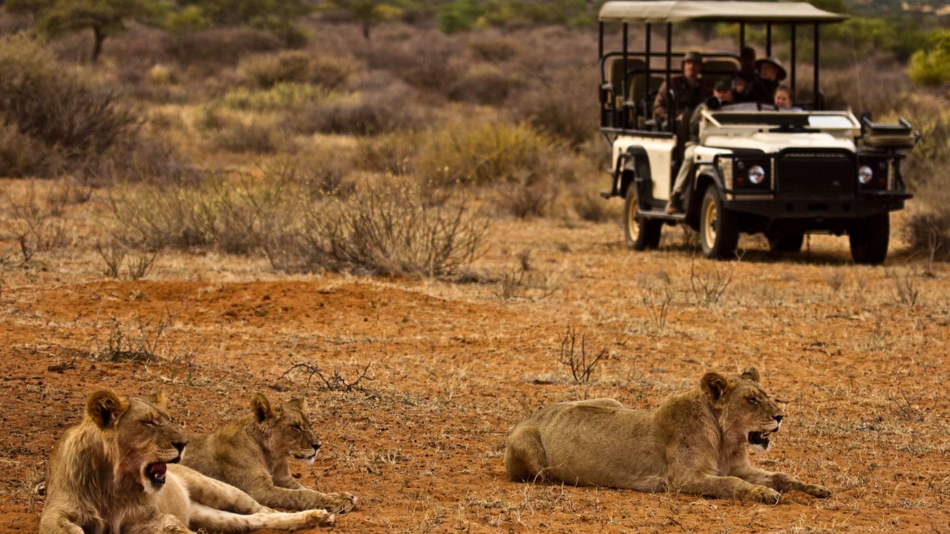 Pirschfahrten mit großartigen Wildtiersichtungen
