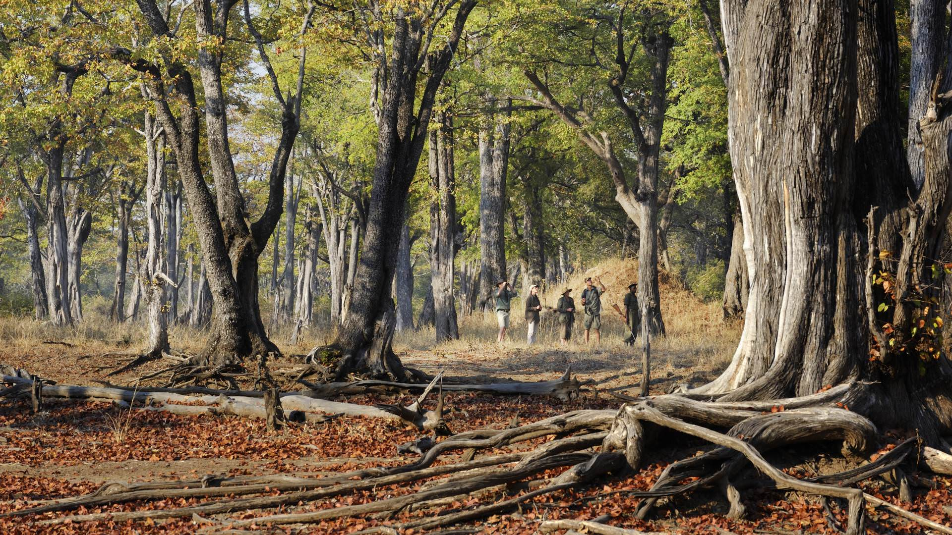 Mwamba Bush Camp South Luangwa Sambia Experten