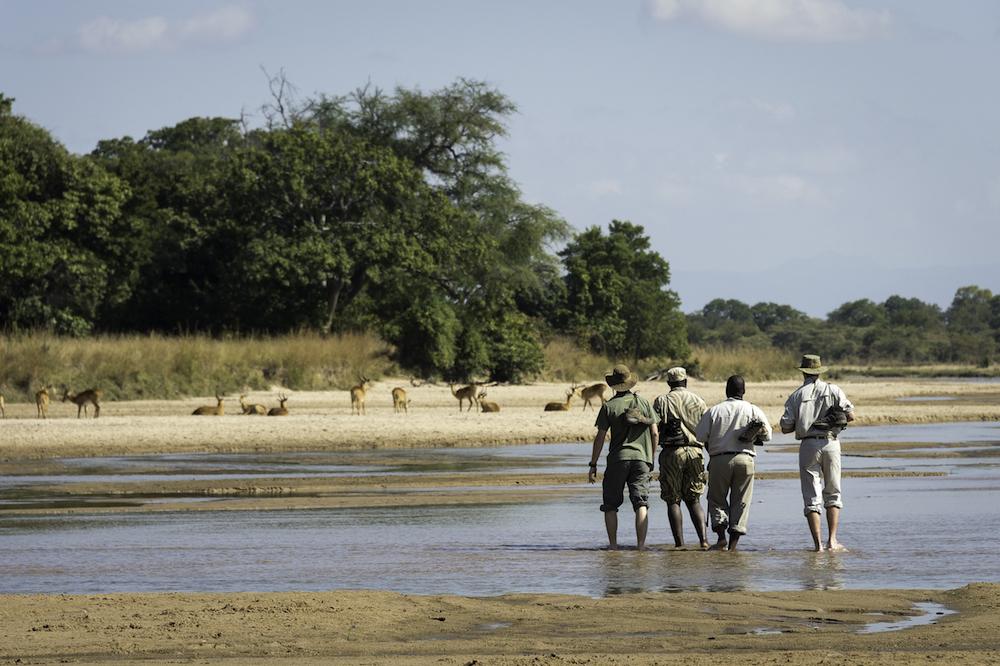 Walking safari mit der bushcamp company zambia