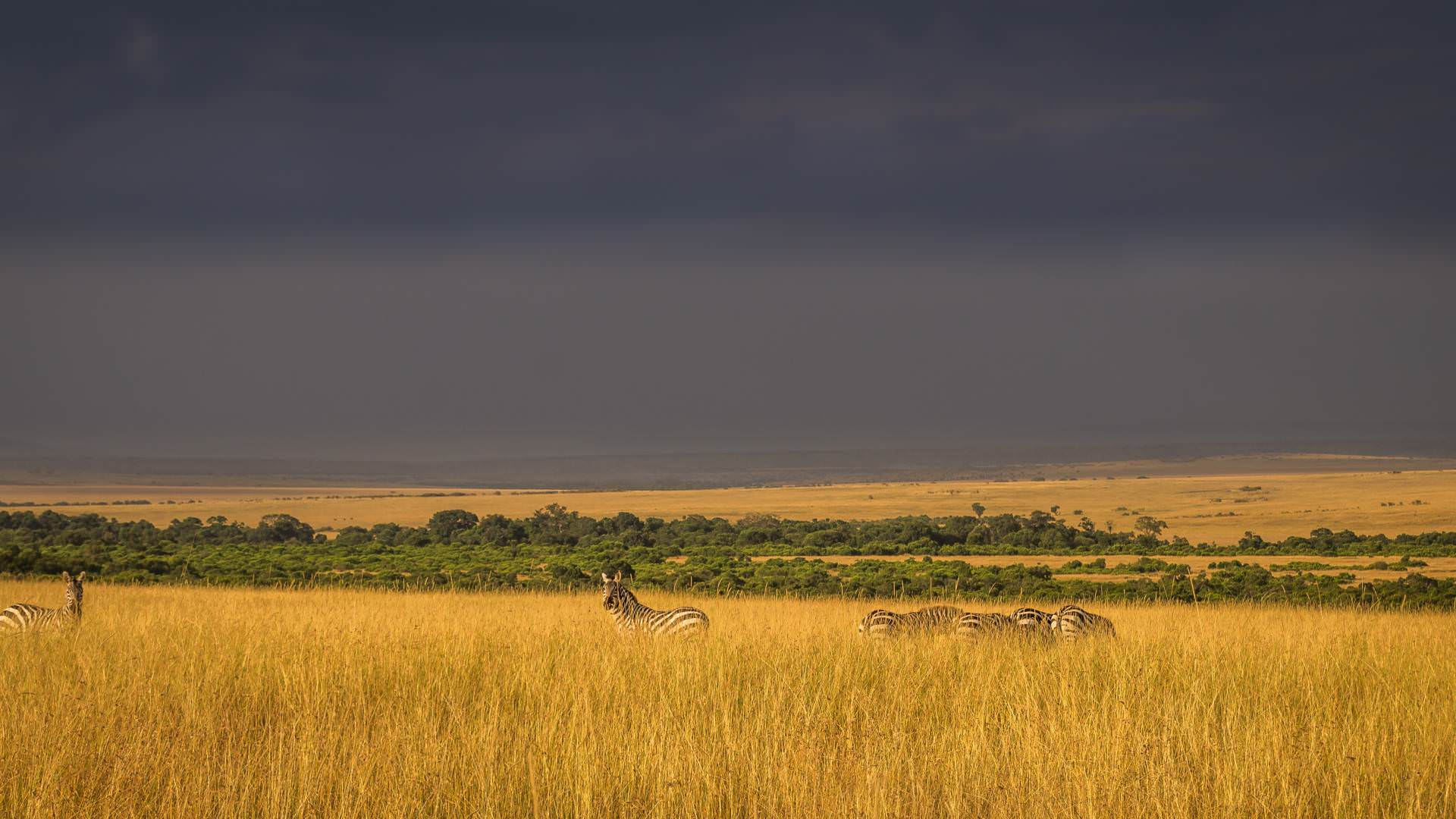 Zebra across the plains with pintoafrica.com
