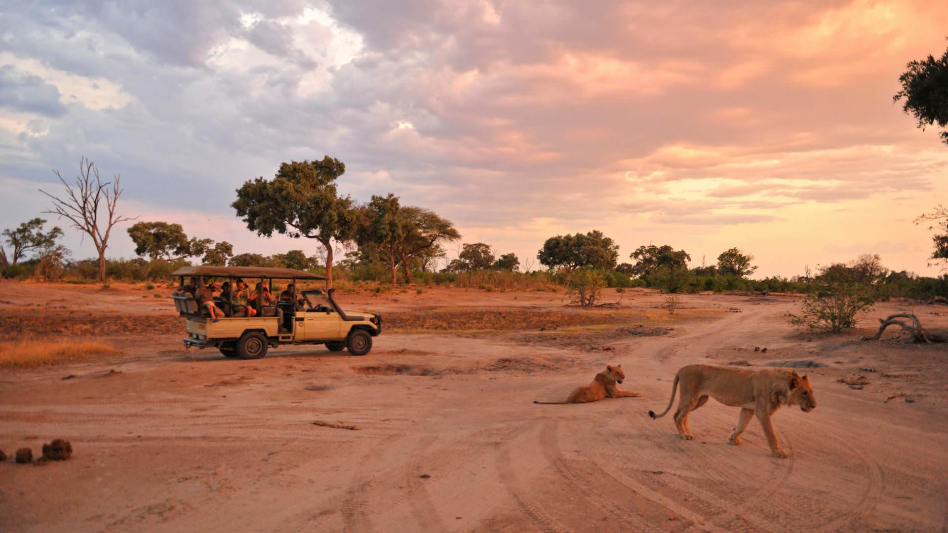 Abendsafari Pinto Afrika