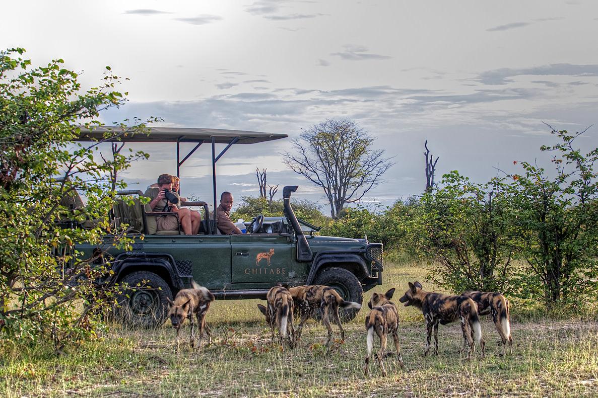 Shakal Afrika Safari Ausflug