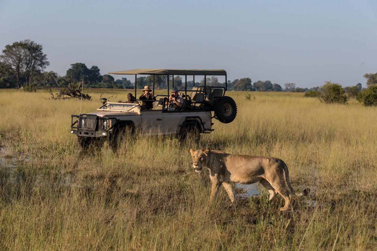 Safari Africa