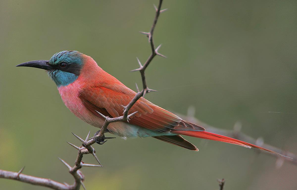 Faszinierende Vogelarten