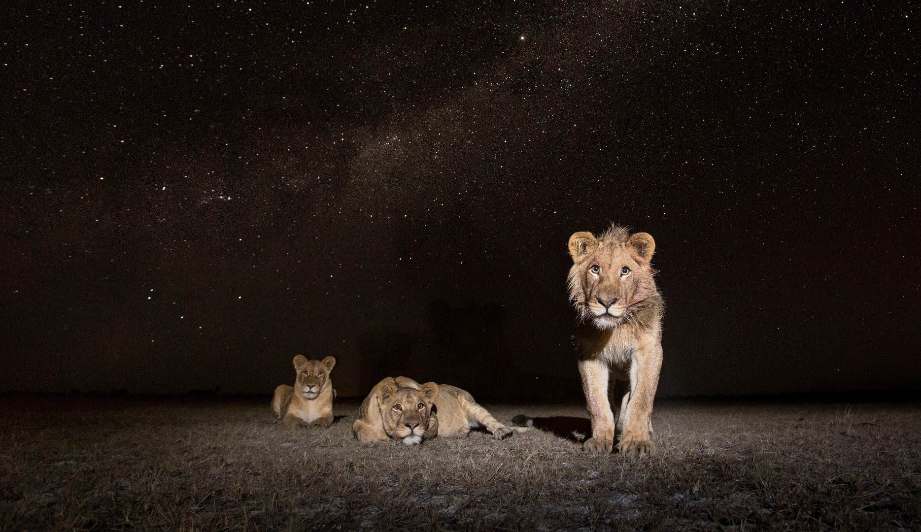 Liuwa Plains National Park Safari Sambia Nacht-Pirschfahrten oder Nightdrives- Infos von Safari Experten | Pinto Africa